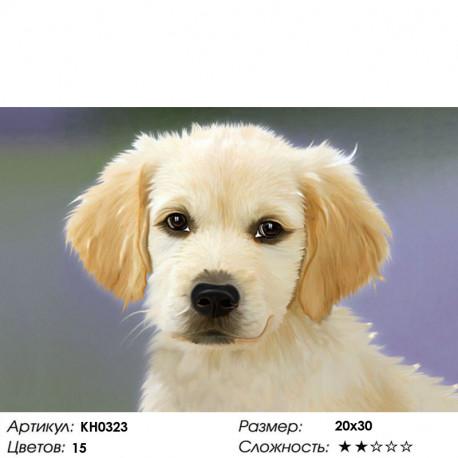 Количество цветов и сложность Пушистый щенок Раскраска по номерам на холсте Molly KH0323