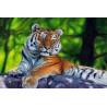 Амурский тигр Раскраска по номерам на холсте Molly KH0329