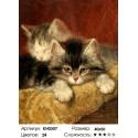 Котята Раскраска по номерам на холсте Molly