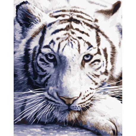 Белый тигр Раскраска картина по номерам MG3290