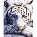 Белый тигр Раскраска картина по номерам на холсте
