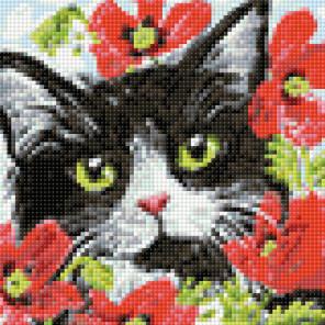 Раскладка Кот в цветах AG2278