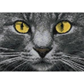 Раскладка Жёлтые глаза AG2308
