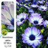 Крупно Альпийские цветы AG2320