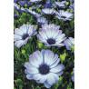 Раскладка Альпийские цветы AG2320