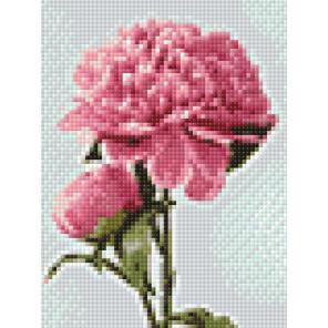 Розовые пионы AG2272
