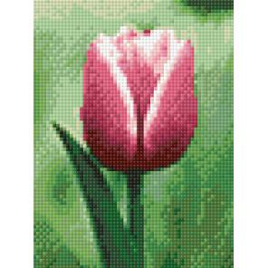 Раскладка Тюльпан AG2274