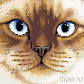 Раскладка Сиамская кошка Раскраска картина по номерам на холсте A110