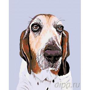 Франклин Раскраска картина по номерам на холсте A264