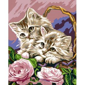 Котята в корзинке Раскраска картина по номерам на холсте KRYM-AN03