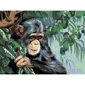 Обезьянка Раскраска картина по номерам на холсте RA013