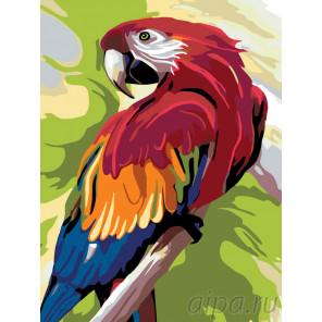 Говорящий попугай Раскраска по номерам на холсте Живопись по номерам A353