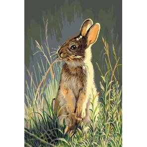 Тревожный заяц Раскраска по номерам на холсте Живопись по номерам A404