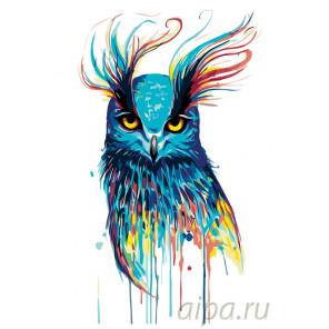 Красочная совушка Раскраска по номерам на холсте Живопись по номерам PA127