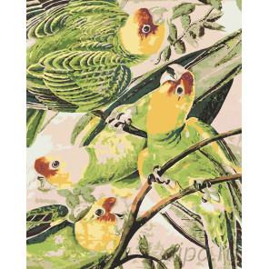 Шумные птицы Раскраска по номерам на холсте Живопись по номерам Z2971