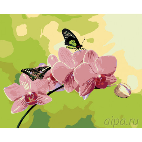 ARTH-AH243-80x100 Розовые орхидеи Раскраска по номерам на ...