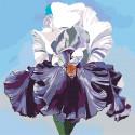 Пышный ирис Раскраска по номерам на холсте Живопись по номерам F57