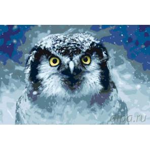 Зимняя сова Раскраска картина по номерам на холсте A430