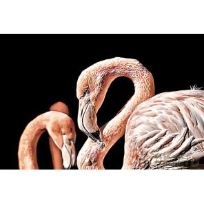 Раскладка Пара розовых фламинго Раскраска картина по номерам на холсте A431