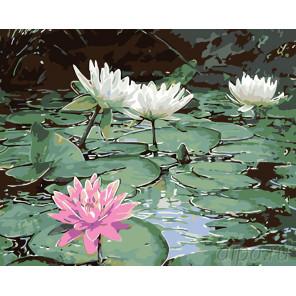 раскладка Озеро с лотосами Раскраска картина по номерам на холсте