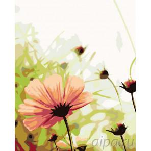 Нежность цветка Раскраска картина по номерам на холсте KTMK-69536