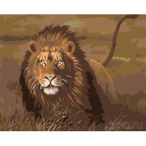 Раскладка Львиная охота Раскраска по номерам на холсте Живопись по номерам KTMK-32548