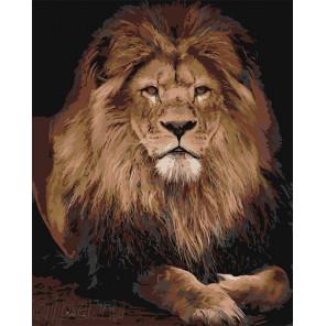Раскладка Лев на отдыхе Раскраска по номерам на холсте Живопись по номерам Z-AB24