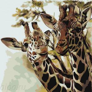 Раскладка Два жирафа Раскраска по номерам на холсте Живопись по номерам Z-AB44