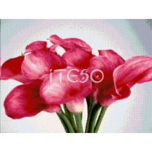 Розовые каллы Алмазная вышивка (мозаика) Iteso