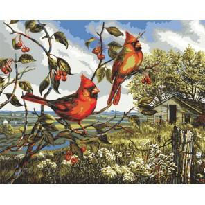 Красное великолепие Раскраска картина по номерам акриловыми красками Plaid