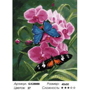 Орхидея и бабочки Раскраска картина по номерам на холсте GX28888