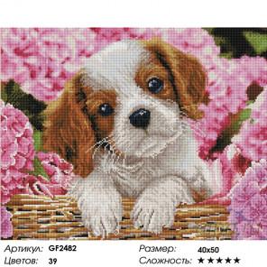 Количество цветов и сложность Милый спаниель вышивка Алмазная мозаика вышивка Painting Diamond GF2482
