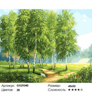 Количество цветов и сложность Молодая березовая роща Раскраска картина по номерам на холсте GX29340
