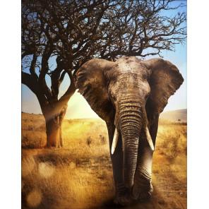 Африканский слон Алмазная вышивка мозаика АЖ-1783
