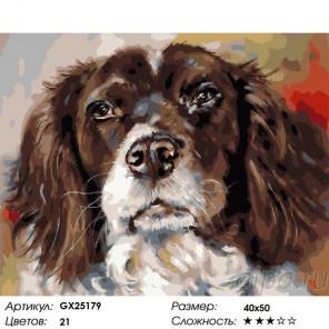 Сложность и количество цветов Спаниель Раскраска картина по номерам на холсте GX25179