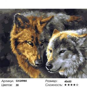 Сложность и количество цветов Волк и волчица Раскраска картина по номерам на холсте GX24985