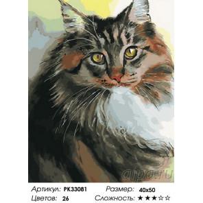 Сложность и количество цветов Пушистый кот Раскраска картина по номерам на холсте PK33081