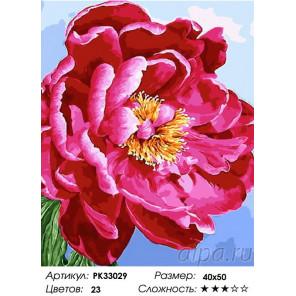 Сложность и количество цветов Пышный цвет Раскраска картина по номерам на холсте PK33029
