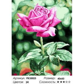 Сложность и количество цветов Садовая роза Раскраска картина по номерам на холсте PK33023