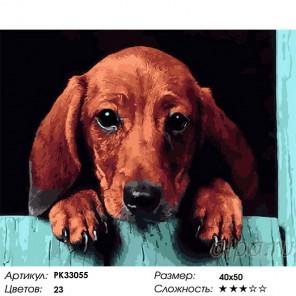 Сложность и количество цветов Такса Раскраска картина по номерам на холсте PK33055