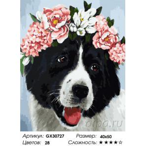 Сложность и количество цветов Собачка в веночке Раскраска картина по номерам на холсте GX30727
