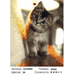 Сложность и количество цветов Любопытный малыш Раскраска картина по номерам на холсте GX29845