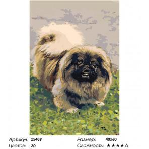 Сложность и количество цветов Собака на лужайке Раскраска картина по номерам на холсте z5489