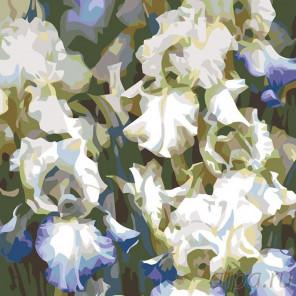 Раскладка Белые ирисы Раскраска картина по номерам на холсте F19