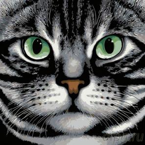 Раскладка Зеленые глаза Раскраска картина по номерам на холсте A119