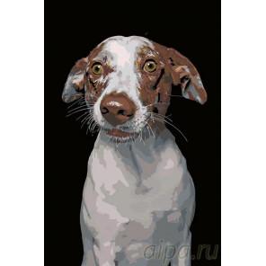 Молли Раскраска картина по номерам на холсте A168