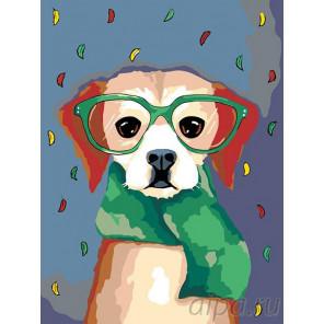 Собачка в шарфе Раскраска картина по номерам на холсте A200