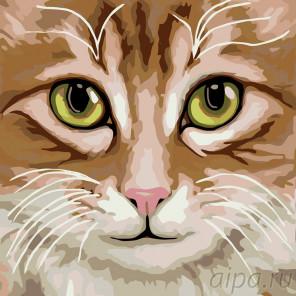 Кошка Люся Раскраска по номерам на холсте Живопись по номерам A396
