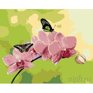 Схема Розовые орхидеи Раскраска по номерам на холсте Живопись по номерам ARTH-AH243