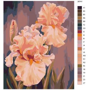 Раскладка Розовые ирисы Раскраска по номерам на холсте Живопись по номерам KTMK-26741
